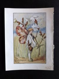 Cicely Mary Barker C1940 Flower-Fairy Print. White Campion Fairy